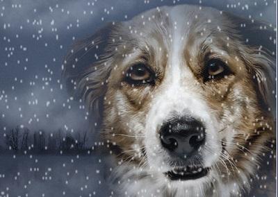 сочинение о знакомой собаке